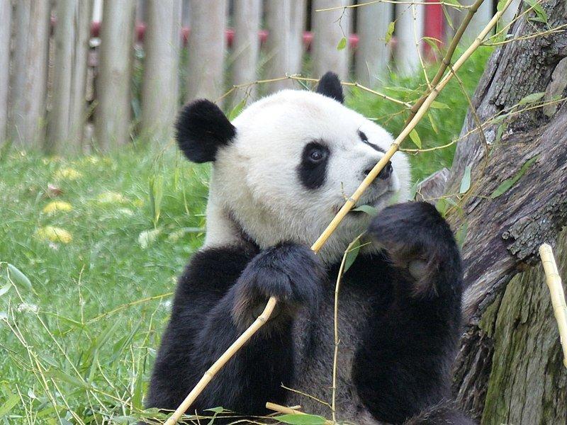 Juicio contra dos empleados del zoo de Madrid por estafa en la venta de entradas
